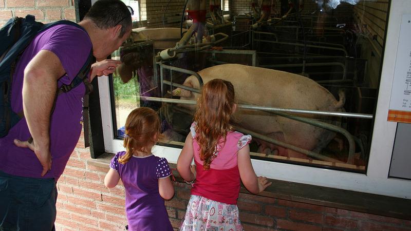 Weekend van het varken