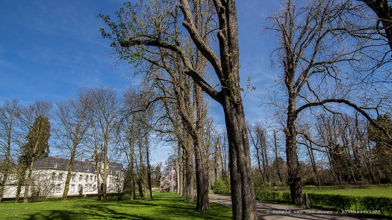 beukenbomen_kasteel vaeshartelt_Ronald van den Hoven / RTV Maastricht