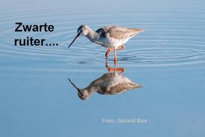 """Vogelkijkdag in de """"Zandloper"""""""