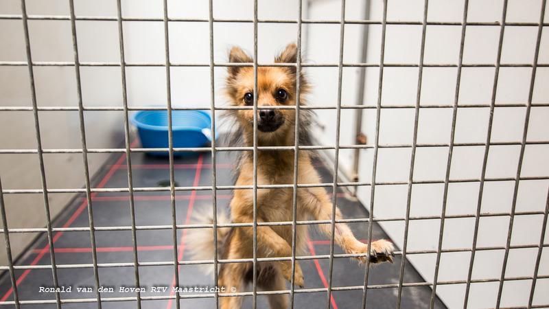 dierenasiel hond_Ronald van den Hoven / RTV Maastricht