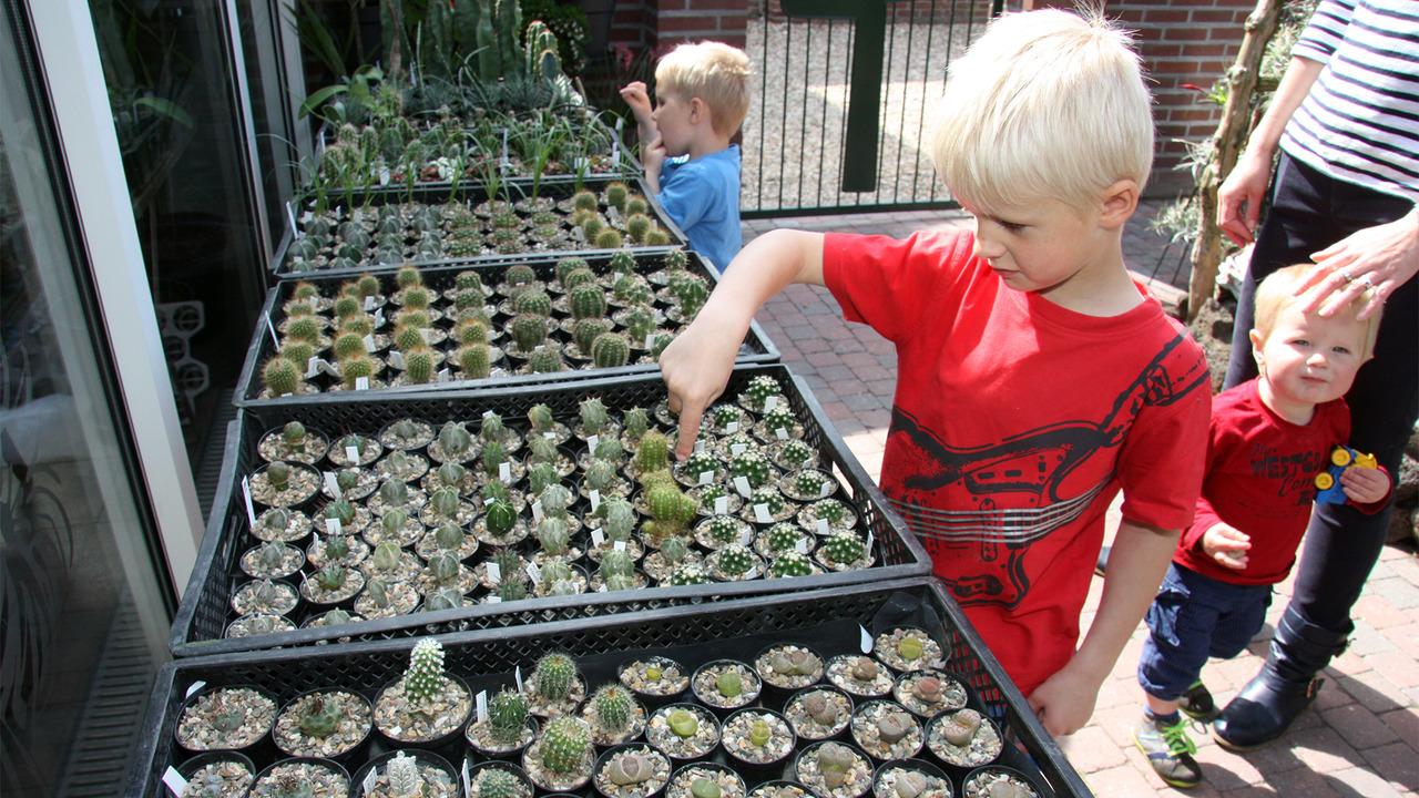 Dsm Keukens Open Op Zondag : Open kas bij cactusliefhebber Knapen SIRIS nl