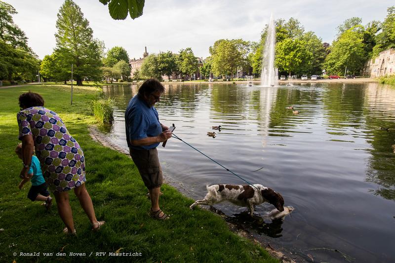 dode vissen stadspark-6_Ronald van den Hoven / RTV Maastricht