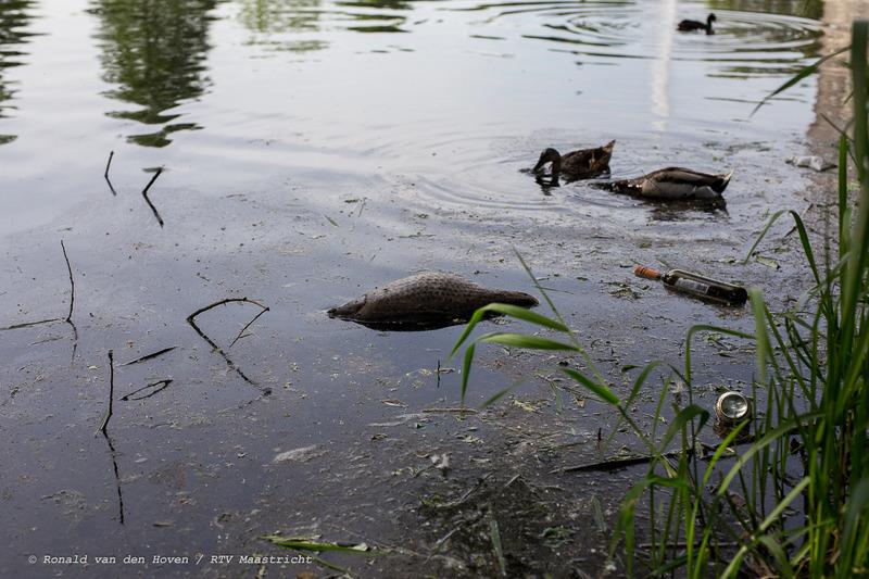 dode vissen stadspark_Ronald van den Hoven / RTV Maastricht
