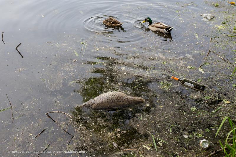 dode vissen stadspark-3_Ronald van den Hoven / RTV Maastricht