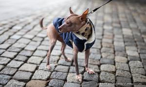 Hulp hondenbezitters gevraagd bij bestrijding woninginbraken